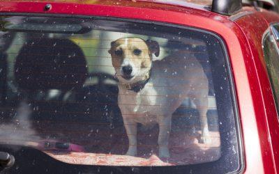 Hitze im Auto: Ich bin kein Hotdog!